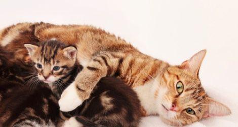 Katt med sin kattunge