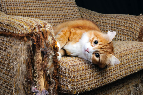 hogyan szoktassa le macskáját a kaparászásról