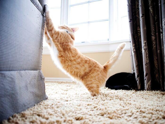 how to stop cats scratching furniture rh feliway com prevent cat scratching sofa avoid cat scratching sofa