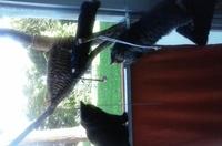 Kitty u. Flori 3.jpg