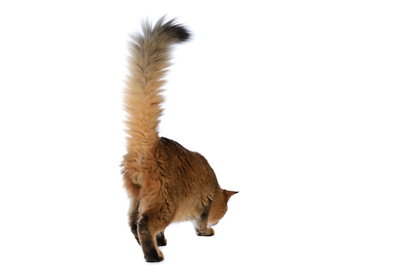 Happy cat tail up