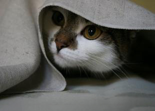 cat hiding behaviour