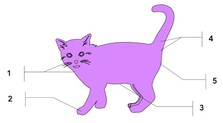 Diagram of a cat pheromone producing areas and structures